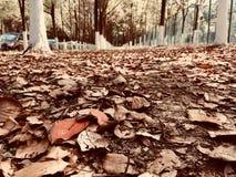 Gefallene Blätter und Frühling wieder lizenzfreie stockfotografie