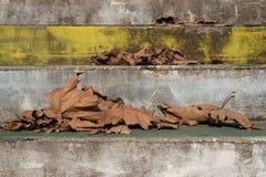 Gefallene Blätter und verblaßte farbige Schritte stockbild