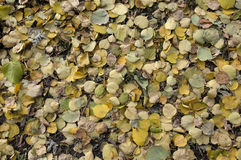 Gefallene Blätter während des Herbstes Stockfotografie