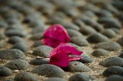 Gefallene Blüte einer magentafarbenen Bougainvillea auf dem Pflaster. Zwei Blüten einer Bougainvillea sind herabgefallen und liegen auf dem Steinboden stock image