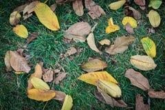 Gefallene Bl?tter auf Gras im Herbst lizenzfreie stockfotos