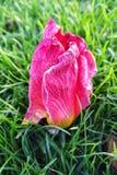 Gefallene Blume im grünen Gras Stockbilder