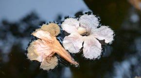 Gefallene Blumen im Wasser Stockfoto