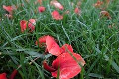 Gefallene Blumenblätter Lizenzfreies Stockfoto