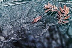 Gefallene Ebereschenbaumblätter lagen auf dünnem Eis lizenzfreies stockbild