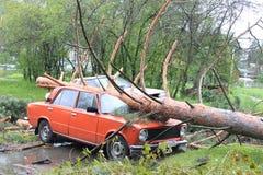 Gefallene Kiefer auf Auto nach Hurrikan stockbilder
