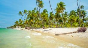 Gefallene Kokosnussbäume Lizenzfreie Stockfotografie