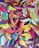 Gefallene natürliche Farben Stockfotografie