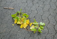 Gefallene Niederlassung mit Blättern im Herbst Stockfotos