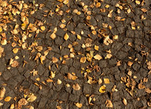Gefallene Orangenblätter auf Pflasterung Stockfotografie
