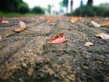 Gefallene Rotblätter, die auf nassem Boden liegen Stockfotografie
