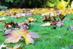 Gefallener Autumn Leaves auf nass Rasen stockfotos