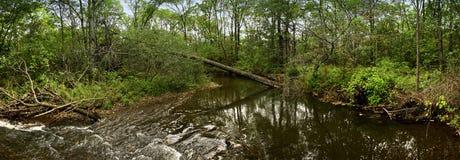 Gefallener Baum über einem Flusspanorama Lizenzfreies Stockfoto