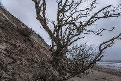 Gefallener Baum Stockbild