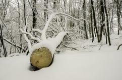 Gefallener Baum Stockbilder