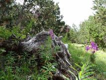 Gefallener Baum Lizenzfreies Stockbild