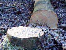 Gefallener Baum lizenzfreie stockfotos