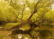 Gefallener Baum Lizenzfreie Stockbilder