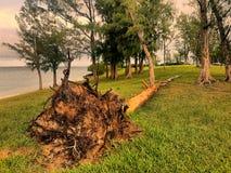 Gefallener Baum Stockfoto