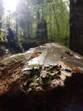 Gefallener Baum lizenzfreie stockfotografie