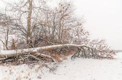Gefallener Baum abgedeckt mit Schnee Lizenzfreie Stockbilder
