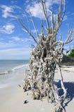 Gefallener Baum auf dem Strand Stockbilder