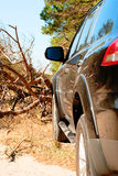 Gefallener Baum auf dem Weg ein großes schwarzes Auto im Wald Lizenzfreies Stockfoto
