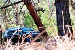 Gefallener Baum auf dem Weg ein großes schwarzes Auto im Wald Stockfoto