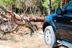 Gefallener Baum auf dem Weg ein großes schwarzes Auto im Wald Stockfotografie