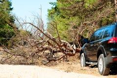 Gefallener Baum auf dem Weg ein großes schwarzes Auto im Wald Stockbild