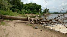 Gefallener Baum auf einem Strand Stockfotografie