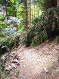Gefallener Baum auf Gebirgsweg stockfotos