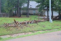 Gefallener Baum auf niedergeworfenen Stromleitungen stockfotografie