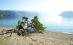 Gefallener Baum auf See Stockfoto