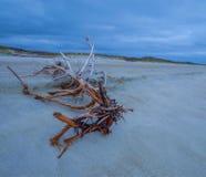 Gefallener Baum auf Strand Stockfoto