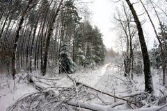 Gefallener Baum blockierte den Weg im Wald Lizenzfreies Stockfoto