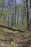 Gefallener Baum, der den Schotterweg 2 blockiert Stockfotos