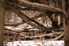 Gefallener Baum, der X macht Lizenzfreie Stockbilder