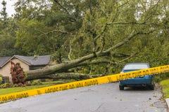 Gefallener Baum in der Straße Stockfotografie