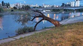 gefallener Baum durch den Fluss stockfotografie