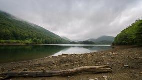 Gefallener Baum durch den See Stockbild