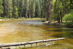 Gefallener Baum in einem Fluss Lizenzfreies Stockbild