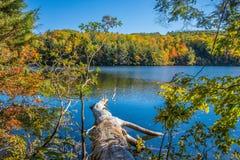 Gefallener Baum in einem Teich umgeben durch Holz im Herbst Lizenzfreie Stockbilder