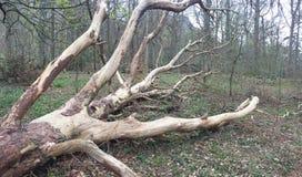 Gefallener Baum gestreift von der Barke lizenzfreies stockfoto