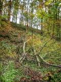 Gefallener Baum im Holz Stockbild