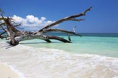 Gefallener Baum im Paradies. lizenzfreies stockbild