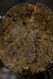Gefallener Baum im Wald lizenzfreie stockfotografie
