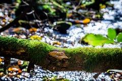 Gefallener Baum im Wald stockfotos
