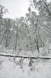 Gefallener Baum im Winterwald Stockfotografie