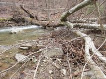 Gefallener Baum an Owens-Nebenfluss Lizenzfreie Stockbilder
